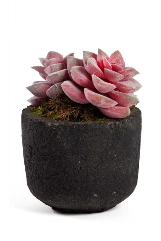 Potted Artificial Flower (11X11X13)